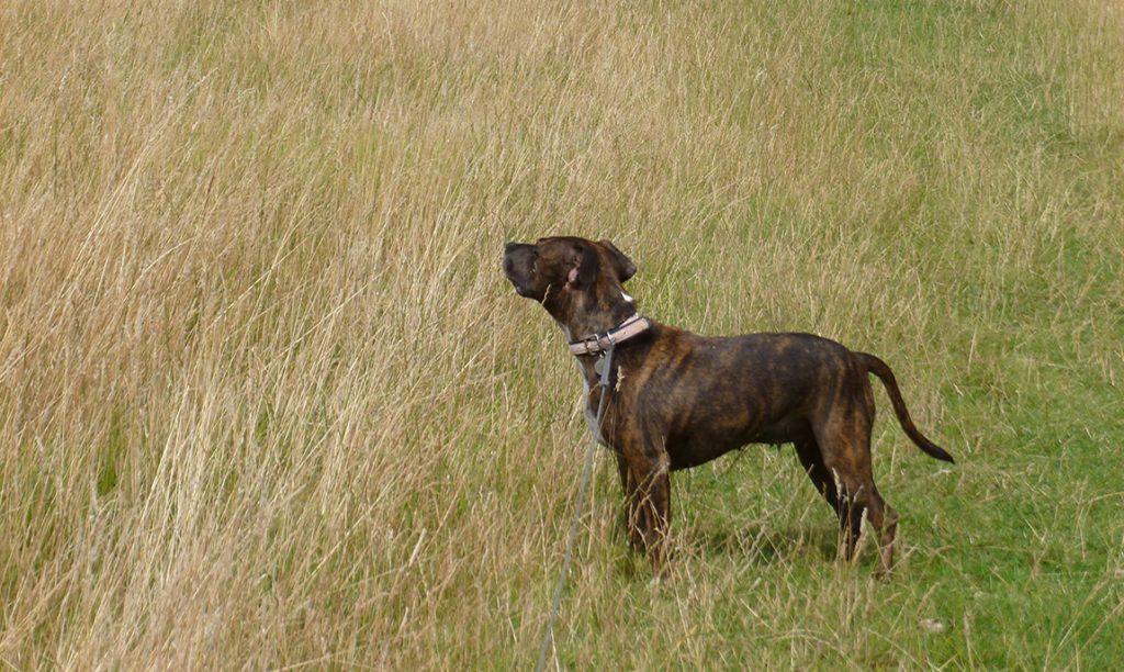 Dog Walking Redhill