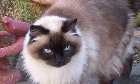 Cat Sitting Cheshire