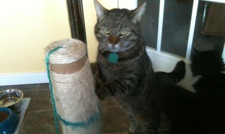 Cat Sitter Surrey