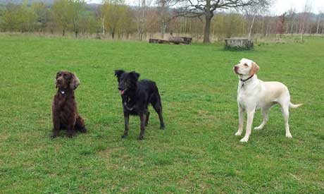 Dog Walking Service Oxford