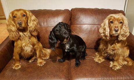 Dog Sitting Nottingham
