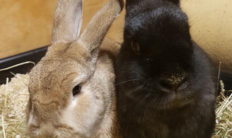 Rabbits Boarding Nottingham