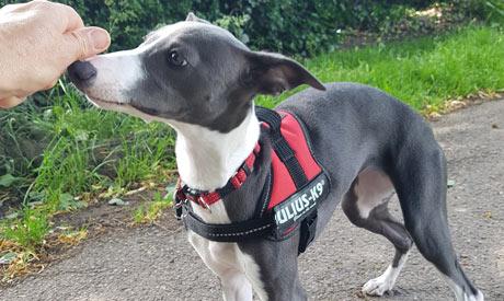 Dog Walking Nottingham