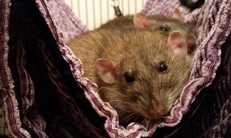 Small Pet Sitting Macclesfield