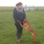 Dog Walkers Salisbury