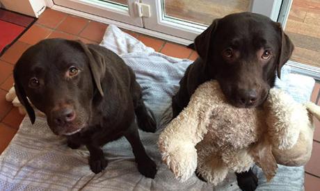 Dog Walkers Hailsham