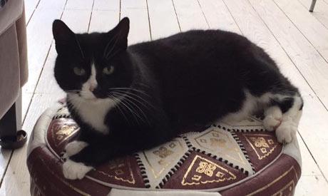 Cat Sitting Eastbourne