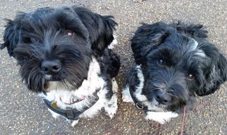 Dog Walkers Macclesfield