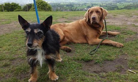 Dog Care Macclesfield