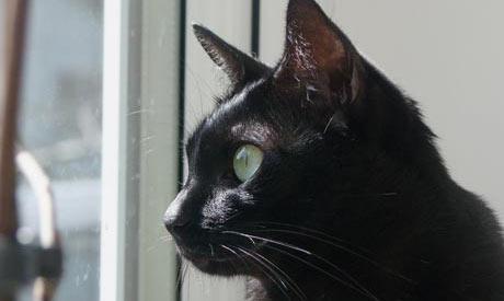 Cat Sitter Cheshire
