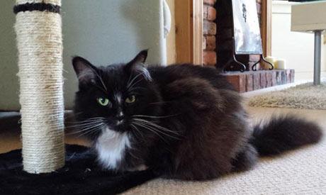 Cat Sitting Macclesfield