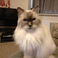 Cat Sitting Service Telford