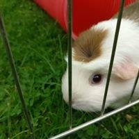 Small Animal Boarding Telford