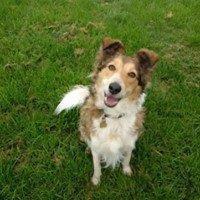 Dog Walkers Telford