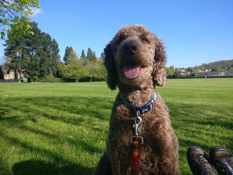 Dog Walking Telford