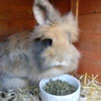 Rabbit Siting Service Telford