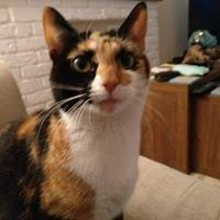 Cat Sitting Telford