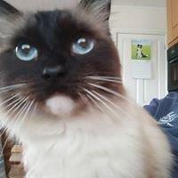 Cat Sitting Telford