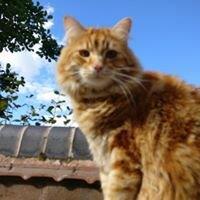 Pet Sitting Telford