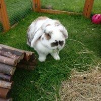 Rabbit Boarding Telford