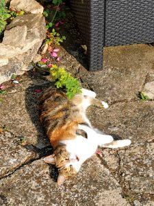 Cat enjoying sun at Paw Pals Cat Sitting