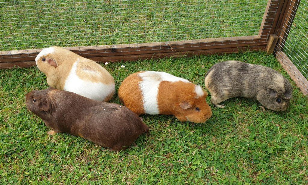 Paw Pals Pet Care Services Hampster
